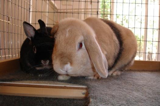 Mimi and Bunn Bunn